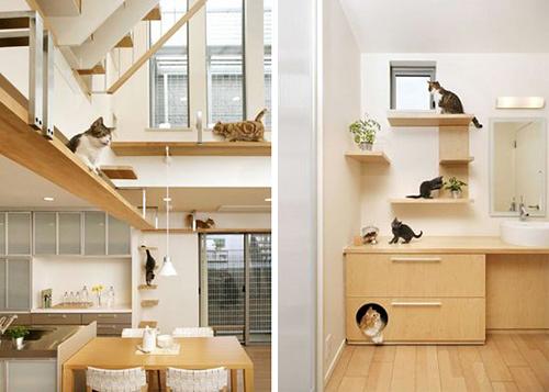 Preparazione all 39 arrivo del gatto in casa gatti co - Gatto defeca per casa ...