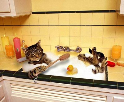 Spazzolare il gatto contropelo