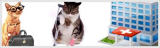 Gatti disabili