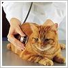 Le malattie del gatto