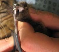 Tagliare le unghie al gatto