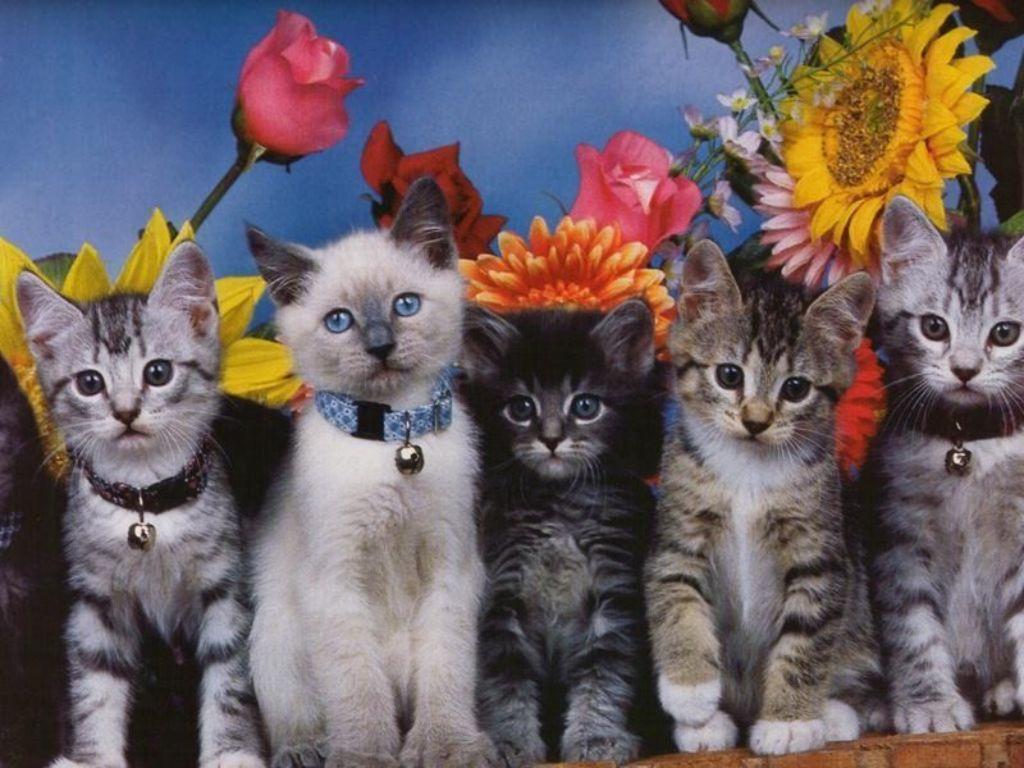 Foto gatti sfondi