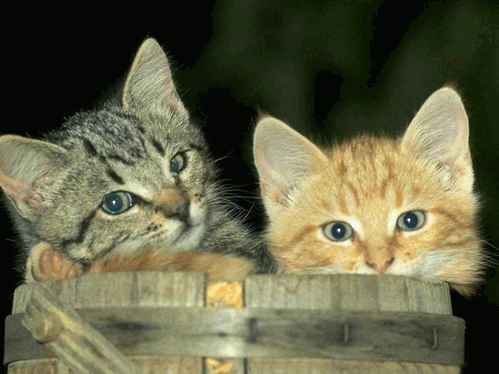 Sfondi gattosi wallpaper gatti co dove i gatti - Gatto defeca per casa ...