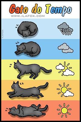 il sonno del gatto  gatti  co  dove i gatti sono di casa