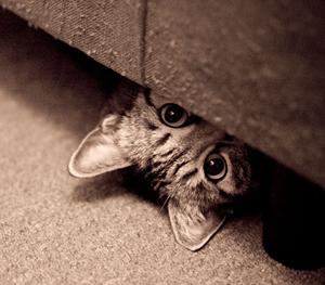 Gatto che si nasconde appena arrivato gatti co dove i gatti sono di casa - Gatto pipi letto ...
