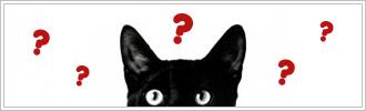 Articoli sui gatti